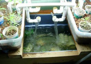 oxygenation-eau-aquaponie