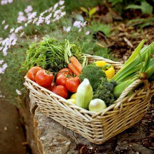 recolte-legumes