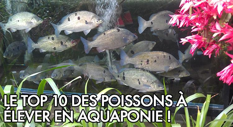Poisson bassin comestible for Aquarium poisson rouge sans pompe