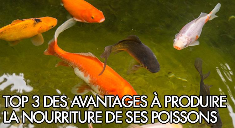 Top 3 des avantages de produire la nourriture de ses for Nourriture a poisson