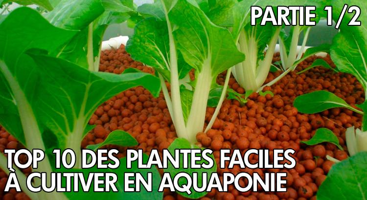 Top 10 des plantes cultiv es en aquaponie partie 1 for Cultiver des autoflo en interieur